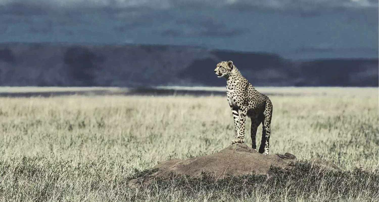 csm_Header_Cheetah_2000_68fc50c24b
