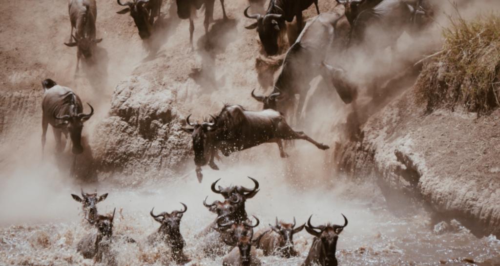 Great Migration Atemberaubendes Naturschauspiel Great Serengeti