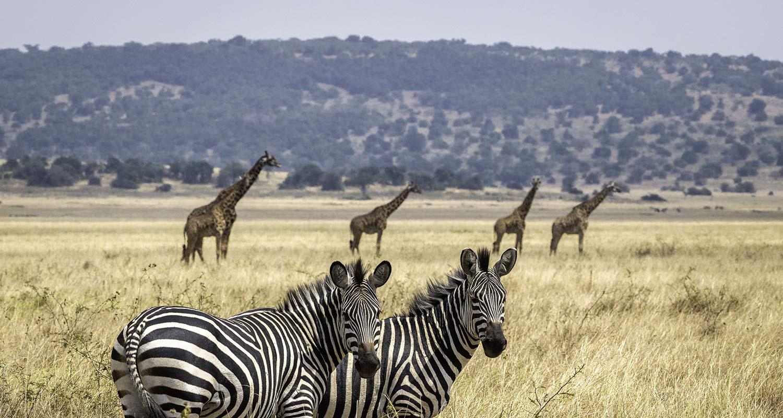 Safariparks